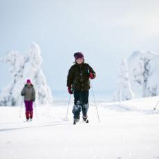 Vintervakre Budor og Hedmarksvidda