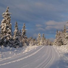 Vinterstengte veger
