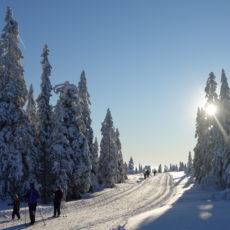 Supert skiføre på Budor!