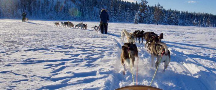 Hundekjøring på Budor
