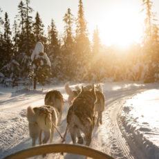 Hundekjøring i vinterferien