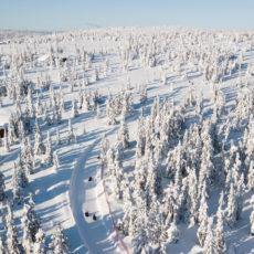 Budor – vinteren 2020