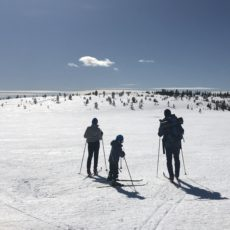 Skaratur i Løtenfjellet