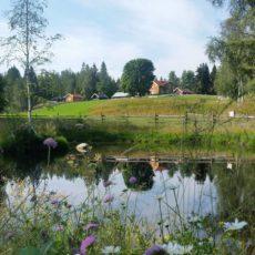 Åpen gård og gårdskafè på Mattisrud