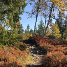 Hvem blir raskest opp til Vesl – Svaen i høstferien?