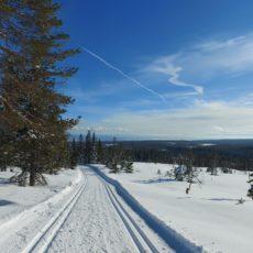 Turtips på ski: Vestafor Svaenlia